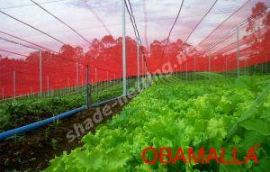red shde net on crops