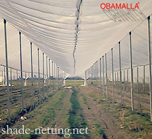 Shadehouse obamalla installed on cropfields for protection of crops against the UV.