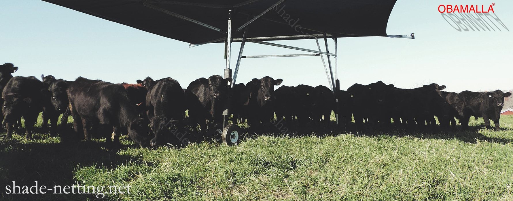 shade cloth obamalla portecting the cattle of the high temperatures.