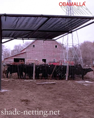 Cattle protected with the shadehouse obamalla.