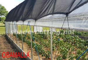 shadehouse used for care crops in garden